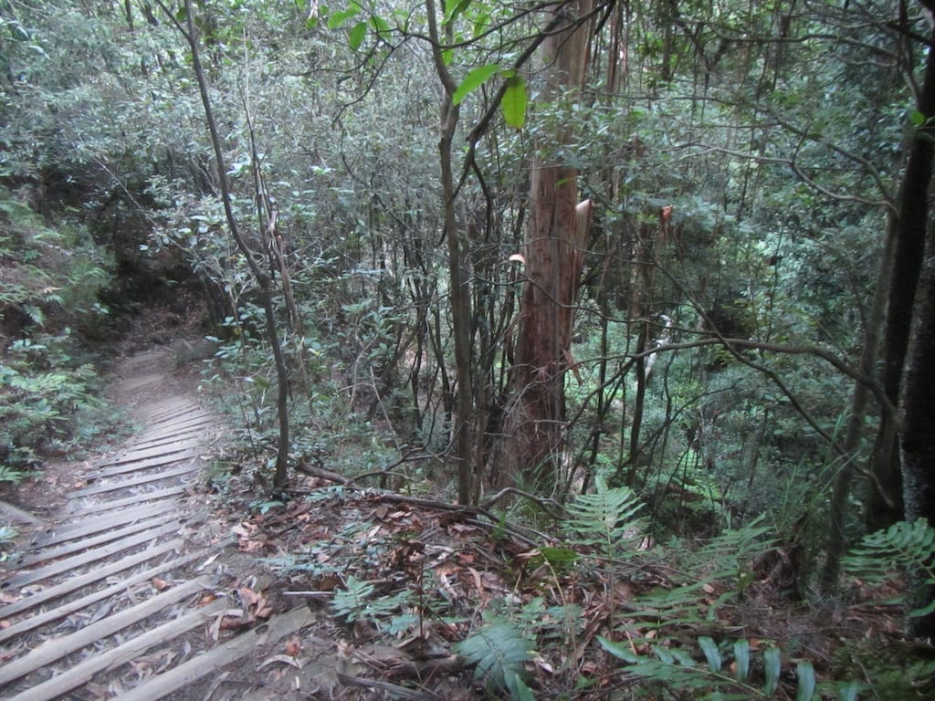 Steps along Fern Bower trail near Katoomba, leading down into the rainforest of the Blue Mountains National Park