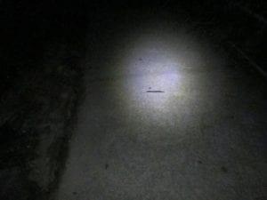 Slug on bushwalking path