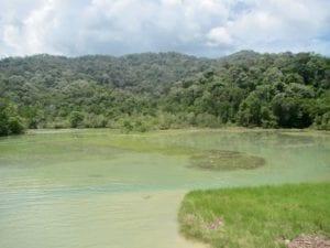 Meromictic lake | Penang State Park | Tasik meromiktik | Taman Negara Pulau Pinang | Malaysia hiking