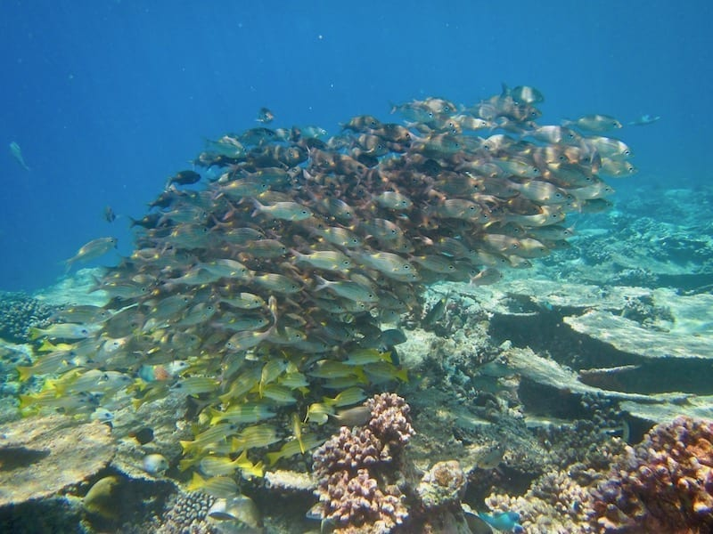 Shoaling fish on coral reef | Dhigurah | Maldives | sustainable travel | Three Essential Next Steps to be an Effective Sustainable Traveller | Teja on the Horizon