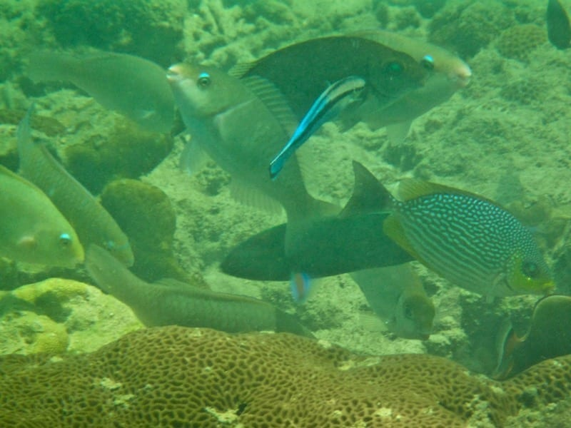 School of reef fishes | Ko Sukon snorkelling | Trang province