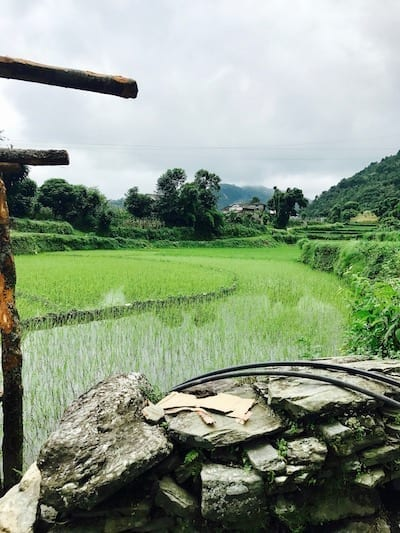 Fields of hill rice in a village near Pokhara | Pokhara day hike | Kande hiking | Dhampus hiking | Nepal tourism | Nepal trekking | Nepal rural life | Annapurna Conservation Area | Teja on the Horizon travel blog