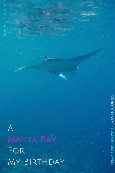 The Year I Was Sent A Manta Ray For My Birthday | Teja on the Horizon | manta ray gliding on current | Mahibadhoo | South Ari atoll | Maldives | snorkelling with devilfish | manta encounter