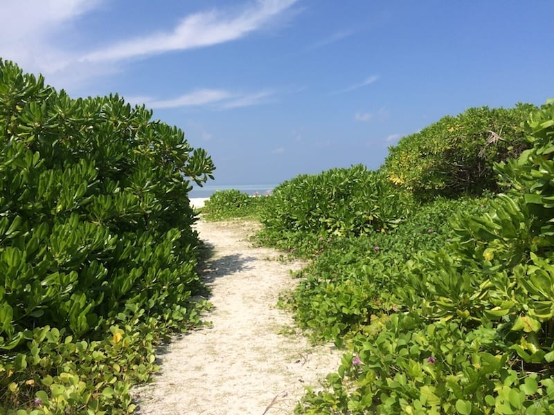 Trail to the beach on Dhiffushi atoll | Maldives local island | Teja on the Horizon