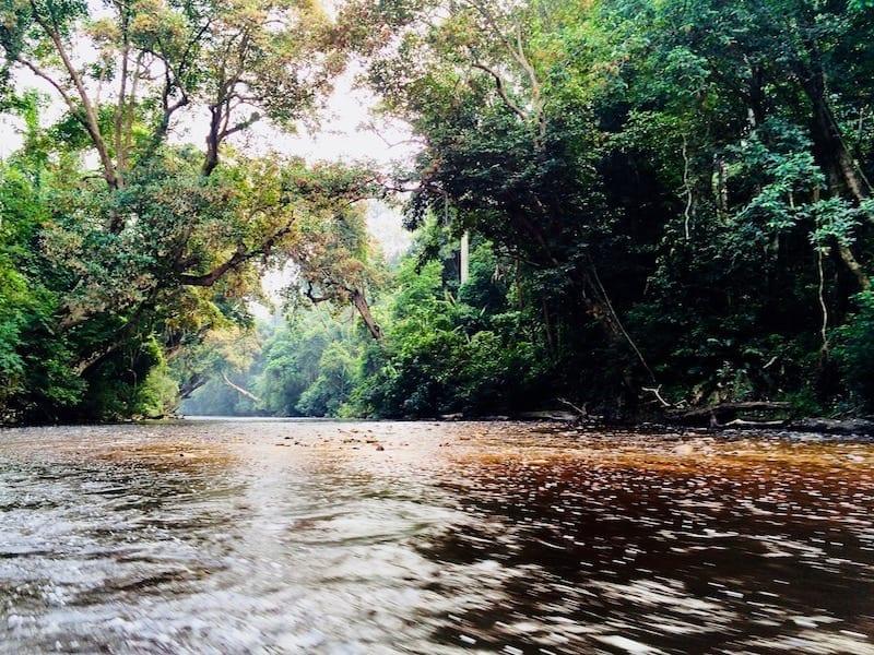 Sungai Tahan rapids | Taman Negara National Park | Pahang rainforest | Malaysian jungle | Malaysia tourism | Malaysia attraction | Sungai Tahan river tributary cruise