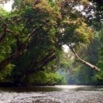 The World's (Almost) Oldest Rainforest of Taman Negara, Malaysia
