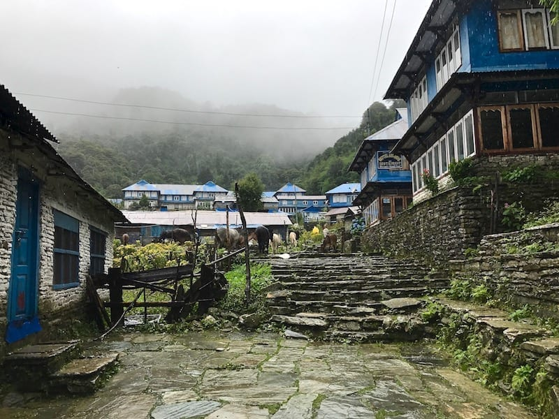Ghorepani | Annapurna in the Monsoon Day 2: At the Brink of Fog and Cloud | ABC trekking in monsoon | Annapurna Circuit in the off season | Nepal hiking | Teja on the Horizon