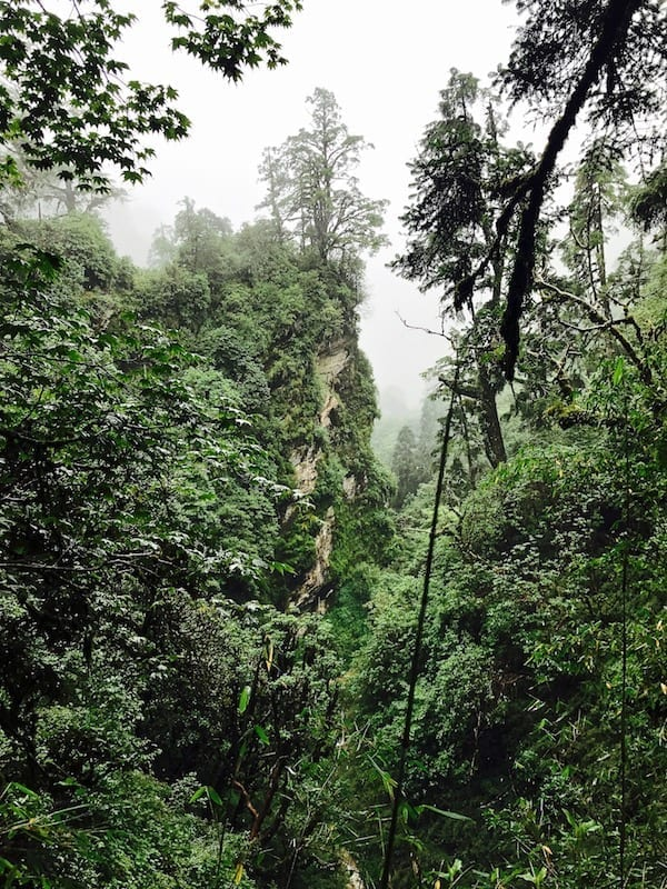 The 'elven wood' in Annapurna   Annapurna in the Monsoon Day 3: The Rock Stacks by the River   Annapurna Sanctuary trek   ABC trekking in monsoon   Annapurna Circuit in the off season   Nepal hiking   Nepal outdoors   Teja on the Horizon