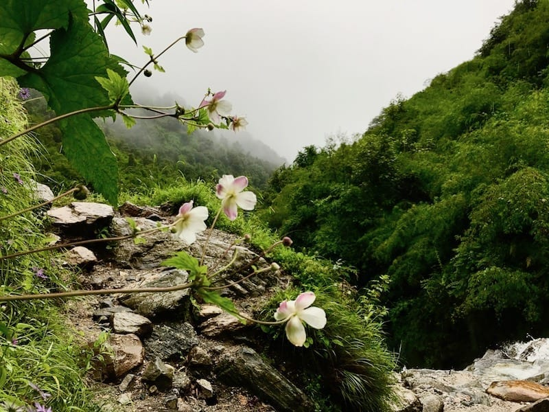 Flowers overlooking Annapurna waterfall | Annapurna in the Monsoon Day 6: The Shrine of Dovan | waterfalls, streams, rapids, and river crossings during Annapurna trekking | ABC trek | Asian female trekking | Teja on the Horizon