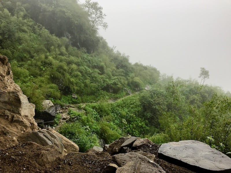 Highland bamboo in the Annapurnas | Annapurna in the Monsoon Day 6: The Shrine of Dovan | ABC trek | Asian female trekking | Teja on the Horizon