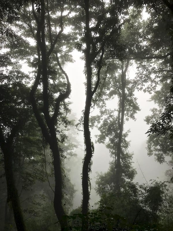 Silhouette cloud forest | Annapurna in the Monsoon Day 9: The Perks of Slow Trekking | Annapurna Sanctuary trek | Hike As You Like | hiking slowly | Lord of the Rings Annapurna | Asian female trekking | Teja on the Horizon