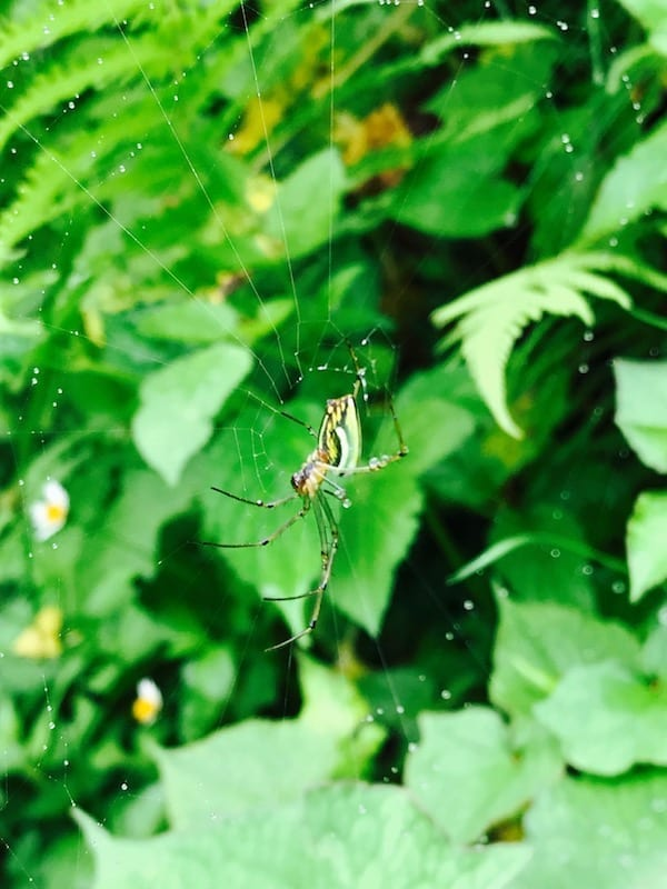 Spider waiting patiently on its web | Annapurna in the Monsoon Day 9: The Perks of Slow Trekking | Annapurna Sanctuary trek | Hike As You Like | hiking slowly | Nepal spiders in the mountains | Asian female trekking | Teja on the Horizon