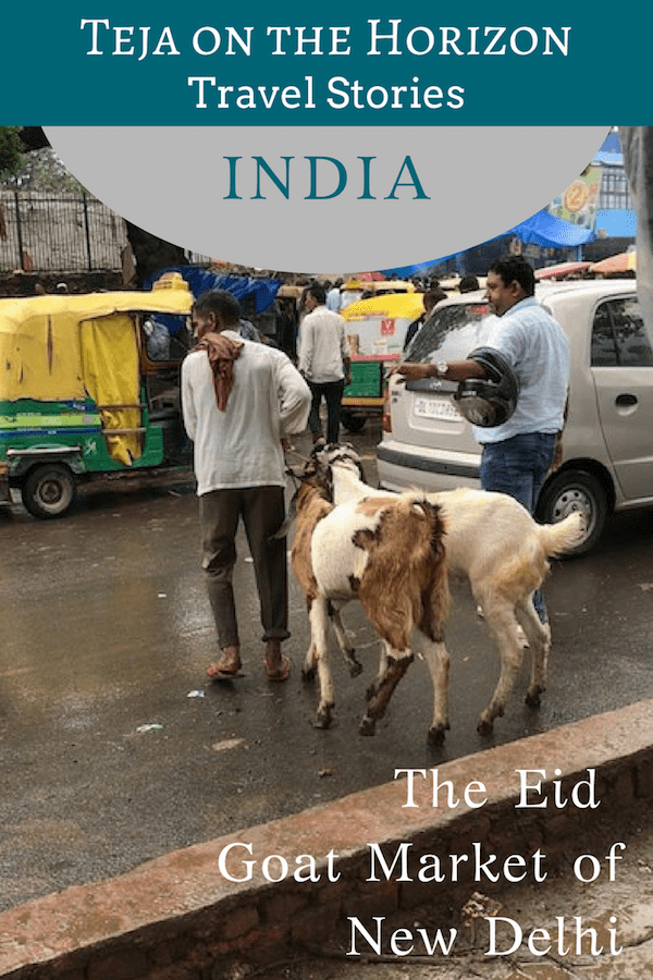 Travel article 'We Nearly Bought a Goat in the Delhi Goat Market' on travel and sustainability blog Teja on the Horizon | Pinterest image| Man crossing a road in New Delhi after purchasing two goats for Eid at the goat market | Reflections on inequality and sustainability