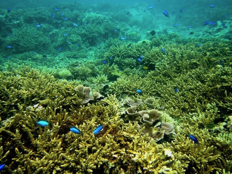 Portion of Boracay coral reef which is still mostly intact and healthy | Boracay day tour snorkelling