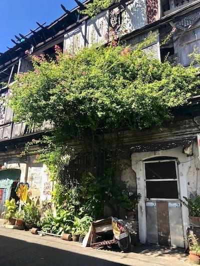 Charming abandoned house with overgrown vegetation overhang along a street in Vigan old city, Ilocos Sur, the Philippines