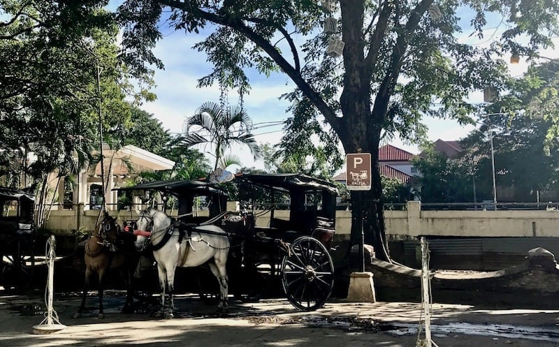 Parking area under the shade of trees for the kalesa horse-drawn carts in Vigan, the Philippines | Spanish Philippine heritage | Things to do in Vigan